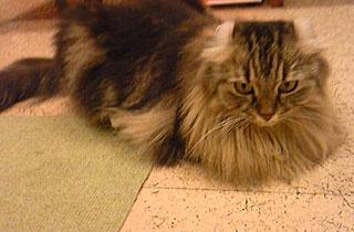 20100914-cat1.jpg