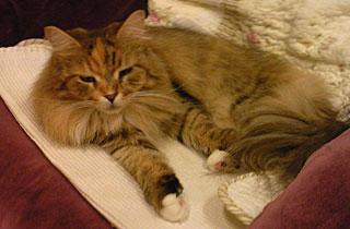 20100914-cat2.jpg