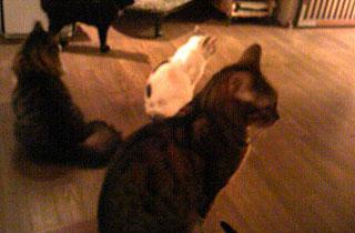 20100914-cat3.jpg