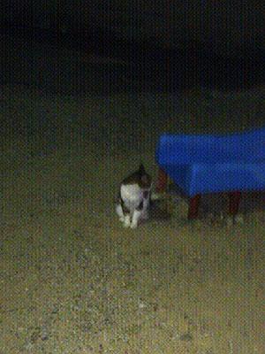 20111006-cat_park.jpg
