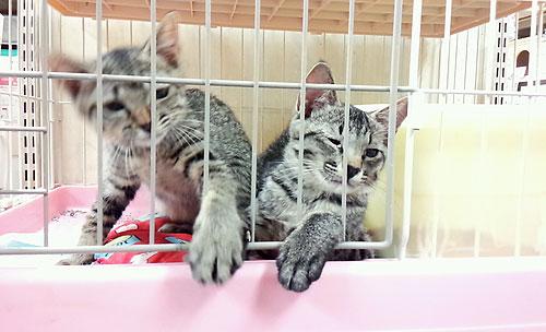20140624-cats_02.jpg