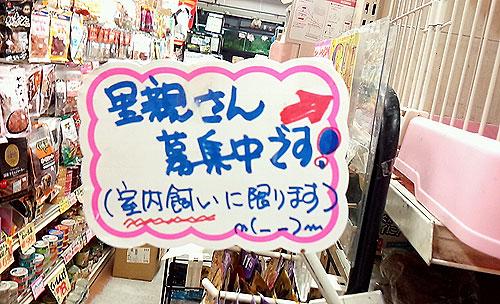 20140624-cats_03.jpg