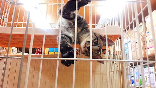 20140709-cat_s.jpg