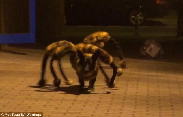 20140906-spider.jpg
