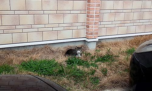 20160326-cat.png