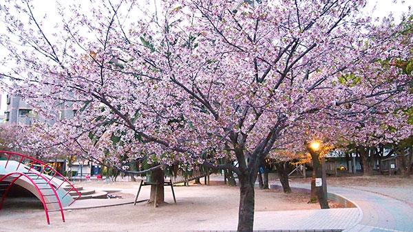 桜 写真03